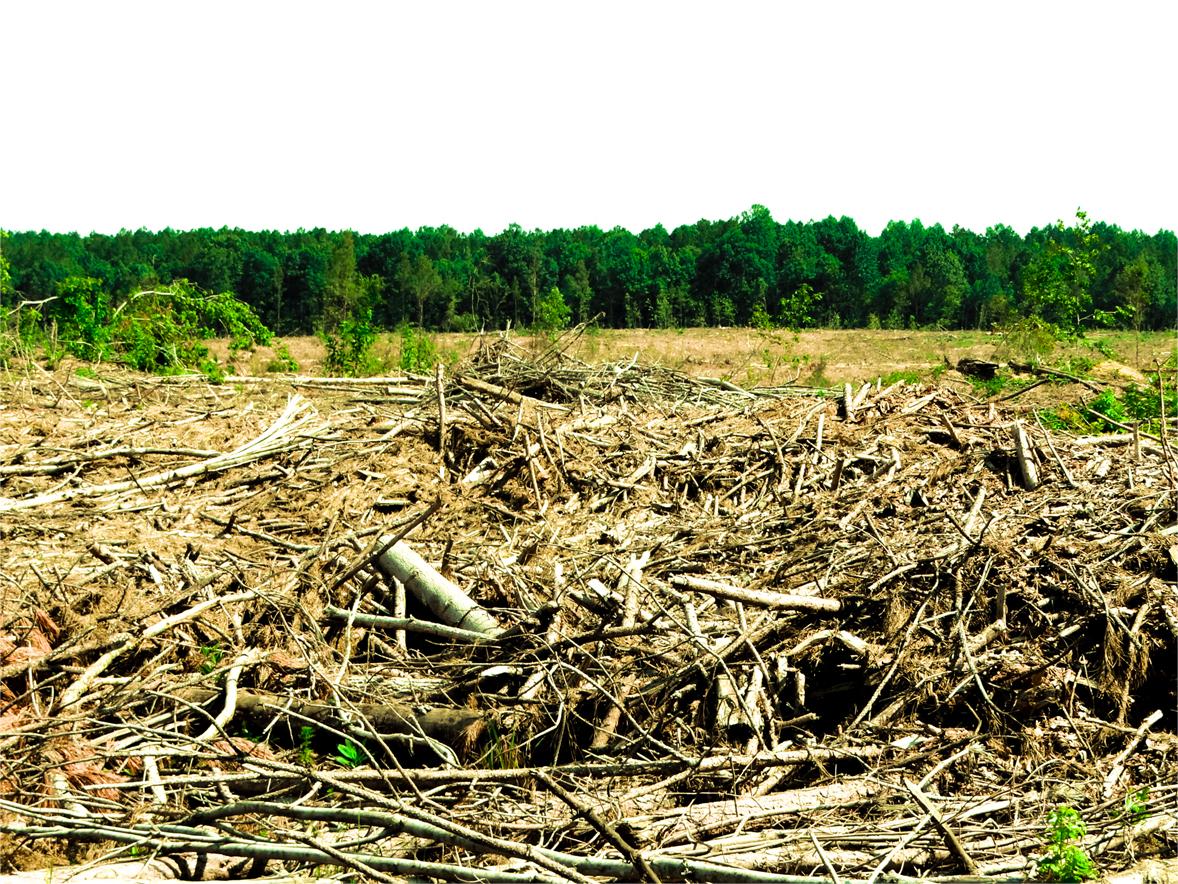 desmatamento.jpg