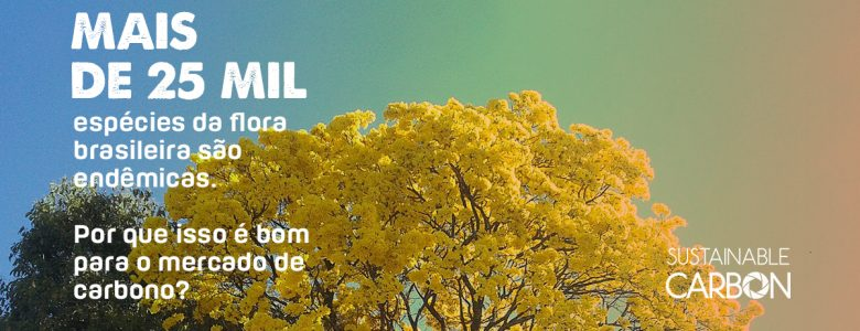 Flora e biodiversidade brasileira